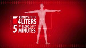 how to reverse kidney disease